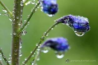 Как фотографировать цветы,советы