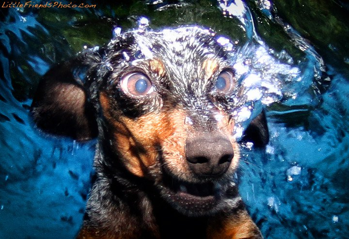 Фото собак под водой